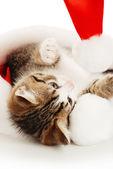 Cat in hat — Stock Photo