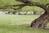 Swing on a tree — Stock Photo
