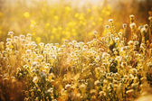 Autumn sunny day — Stock Photo