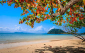 Isolated white sand beach on tropical island — Stockfoto