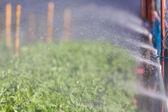 Organic plat being watered — Foto de Stock