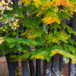 Autumn the forest on top of the mountain — Stock Photo #38869159