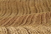 Over farm field — Stockfoto