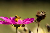 Beautiful flower with insect — Stock Photo