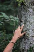 Mãos — Fotografia Stock