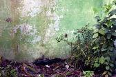 Desolated wall — Zdjęcie stockowe