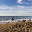 Stock Photo: Old MWalking On Beach With Dogs