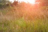 Meadow — Foto de Stock