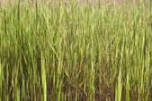 Green meadow. — Stock Photo