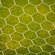 Stock Photo: Soccer nets
