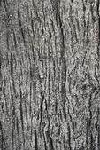 Cemento madera textura — Foto de Stock