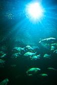 Aquarium — Stockfoto