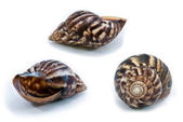 蜗牛壳 — 图库照片