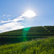 Stock Photo: Teplantations on slopes