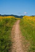 Flowers yellow corridor — Foto de Stock