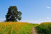 Yellow flower field view — Foto de Stock