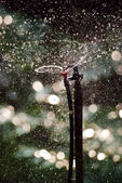 Sprinkler in the garden — Stock Photo