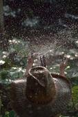 Capped children playing in a garden sprinkler — Stock Photo