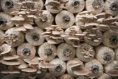 Nursery Mushrooms — Foto Stock