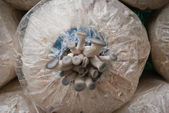 Nursery Mushrooms — ストック写真