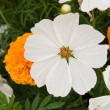 White flowers — Stock Photo #38881787