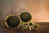 Girassol com sementes de girassol — Fotografia Stock