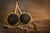 Sunflower with sunflower seeds — Stock Photo