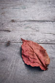 Dry leaves on a wooden floor — Stock Photo