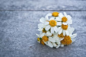 A small bouquet of white daisies on a wooden floor. — 图库照片