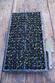 Planting tray — Stock Photo