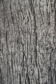 Texture wood cement — Photo