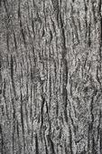 Texture wood cement — Stockfoto