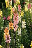 Färgglada blommor — Stockfoto