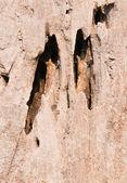 tree hollow — Стоковое фото
