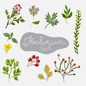 Different plants. Herbarium — Stock Vector