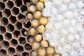 Wasps nest  — Stock Photo