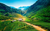Tea plantations on angkhang mountain, chiang mai, thailand — Stock Photo