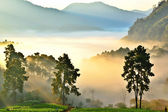 Misty morning in strawberry garden at doi angkhang mountain, chi — Stock Photo