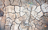 Dry land. Cracked ground background and texture. — Stock Photo