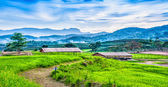 Landscape of Tea plantation on the hill with cottage — Stock fotografie