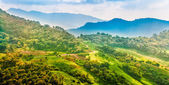Landscape of mountain with road and plantation, Chiang rai,Thail — Foto Stock