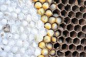 Wasps nest — Stock Photo