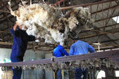 The Shearing Shed — Stock Photo