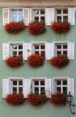 Windows with Geraniums 6417 — Stock Photo