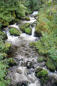 Creek floating in rain forest 5874 — Stock Photo