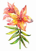 Orchid. Watercolor — Stock fotografie
