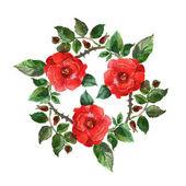 Czerwona róża. — Zdjęcie stockowe