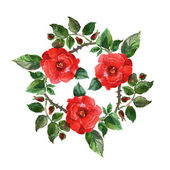 Rosa rossa. — Foto Stock