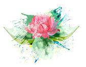 рожева квітка — Stockfoto
