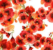 Red Poppies  Pattern — Stock Photo